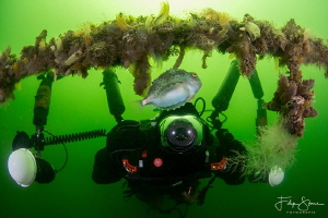 A diver is photographing a juvenile Lumpsucker, Oostersch... by Filip Staes